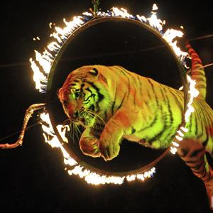 Цирки Юрьи